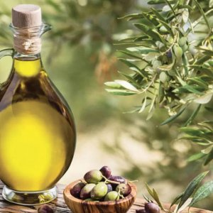 Extra virgin olive oil tour