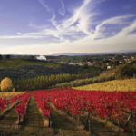 THROUGH THE VINEYARDS OF MONTEPULCIANO WALKING TOUR